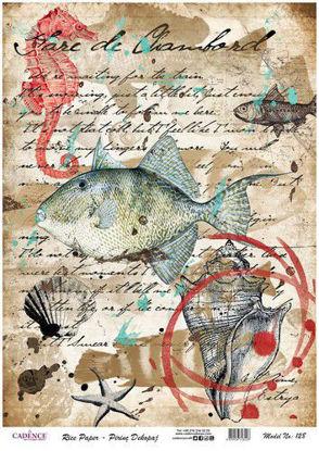 Fish / Shells