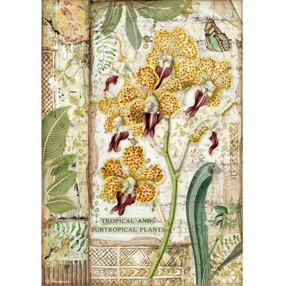 Stamperia Rice Paper A4 Amazonia Orchid